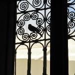 小鳥が窓ガラスをノック。