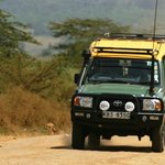 4x4 safari jeep