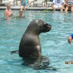 Private viewing of Sealion in pool