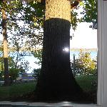 Big tree trunk in front of window blocking views