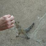 Hand feeding Squirrel