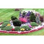 Mini Asian garden