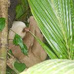 resident sloth