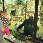 gorilla exhibit