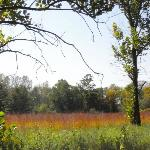 Big bluestem prairie grass in the autumn