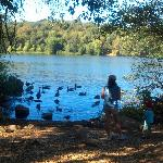 feeding ducks & geese