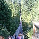Suspention bridge. Start point