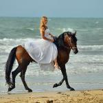 How romantic!  The perfect setting for your beach wedding ... horses an optional package extra!