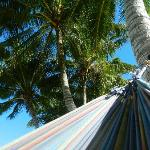 view looking up from my hammock