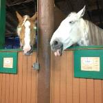 The stables are an added feature at the campgrounds.