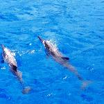 We saw SO many dolphins and BABY DOLPHINS!