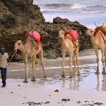 Camels on Diani Beach.