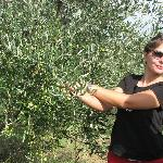 Marialuisa talks about the olive trees