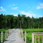 Floating bridge on the Silviculture Trail