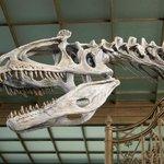Provided by: Muséum des Sciences Naturelles