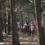Horse Ride Through The Pines