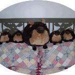 The Moose Room occupants