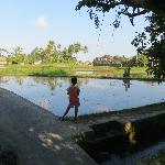 Flooded rice paddies, seen on guided bike ride