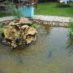 A small lake in the garden