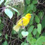 Weaver Birds around the hotel