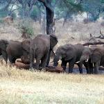 Elepants at water hole