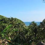 la playa y la cocotera
