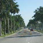 Palm trees line the street for 10 miles
