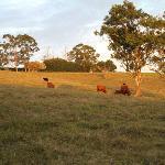 Adjoining farmland we encountered on our bush walk
