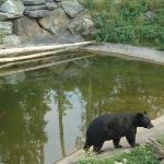 Black bears you can watch