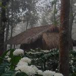 Mountain Mist Homestay resmi