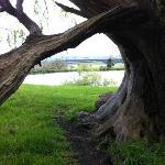 """An """"entrance"""" made by a bending tree beside one of the lakes"""