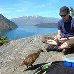 Nosey rare flightless bird at Tea spot in for an inspection- Lake Cruise & Island Nature Walk.