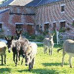 Photo of Les Mout'anes