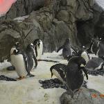i pinguini e le uova