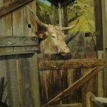 Ox display in the pioneer barn exhibit.