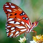 BUTTERFLY  N NATIONAL PARK