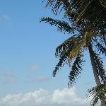 La spiaggia dello Jacaranda