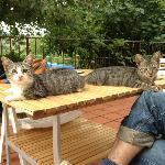 Die Hauskatzen