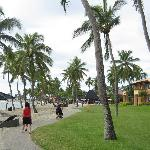 Lots of coconut trees around to make the beach strolls more enjoyable.