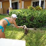 I loved looking for the coatis every day on the grounds