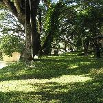 Large expansive area of trees and grass between the bungalows and the River