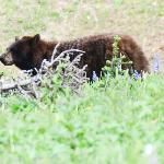 Bear in August