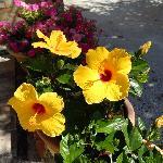 Esterno fiorito