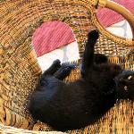 Terrace cat