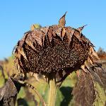 Adjacent crops