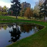 Pond beside the Canal in the Glebe (3rd Av)