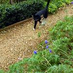 The gardens cat