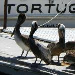 Pelicans... so beautiful.
