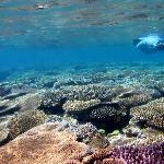 Snorkeling Over Hard Corals on Uoleva Island