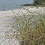 Beach expanse
